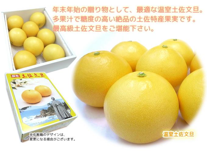 温室土佐文旦果実と化粧箱