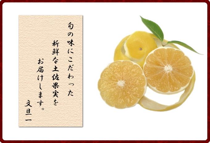 高知県の一番の旬のフルーツを全国へお届けします。